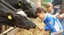 kinderfeestje-farmcamps-de-geele-bosch-3-klein