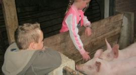 kinderfeesje-op-de-kinderboerderij-varkens-aaien-feltsigt-1-klein